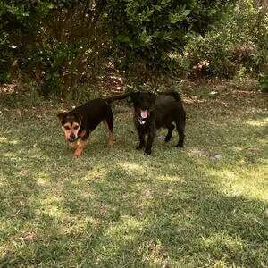 Of Neighbors Dogs and Fences